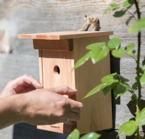 Vogelhuis/Nestkast