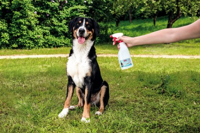 BALLISTOL Stichfrei Animal Pumpspray, 750ml – Tekenafweer en muggenspray